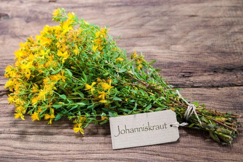Johanniskraut, Hypericaceae, Hypericum perforatum L. (Echtes Johanniskraut), Sonnwendkraut