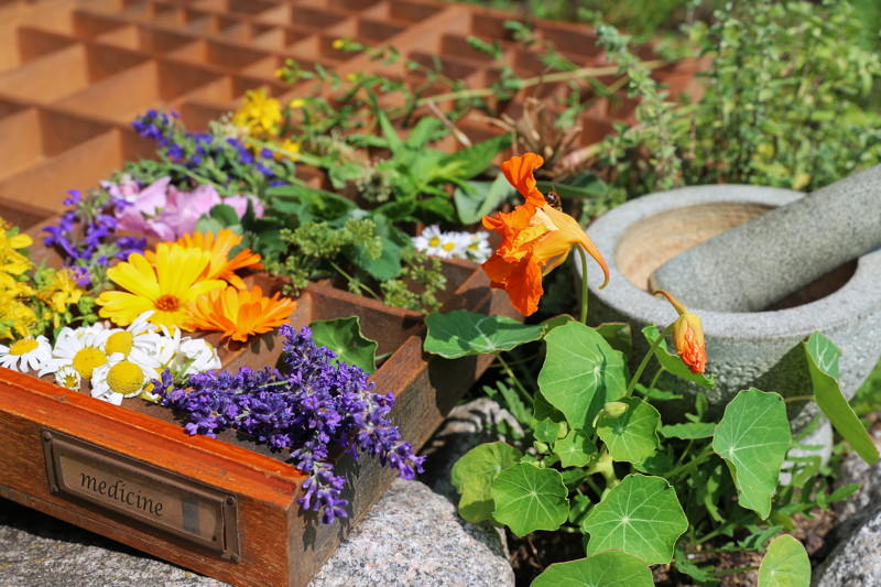 Phytotherapie, Pflanzenheilkunde