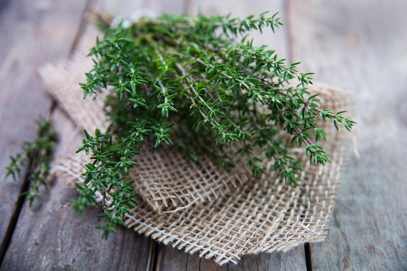 Thymian, Thymi herba, Thymus vulgaris, Thymus zygis