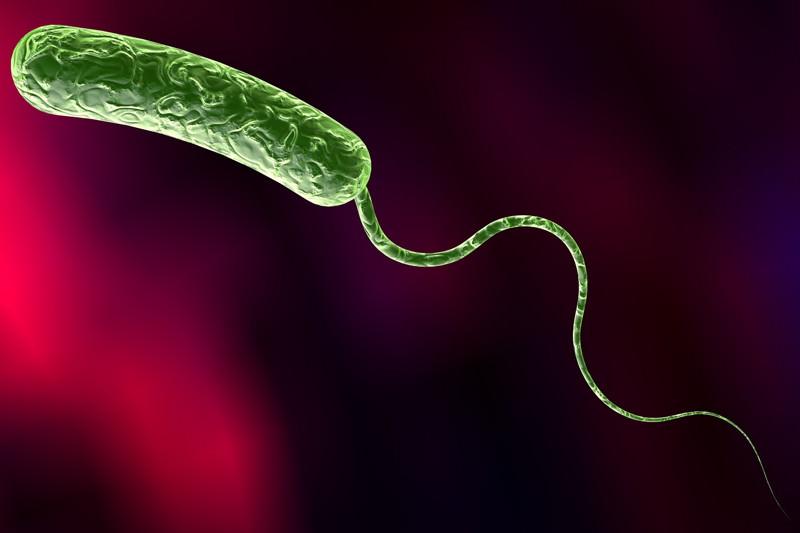 Vibrio cholerae, Cholera-Bakterien, Vibrionen